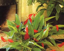BLOEMEN MARIS - Heusden - Kamerplanten