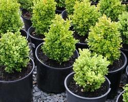 TuincentrumBloemen Maris-VASTE PLANTEN