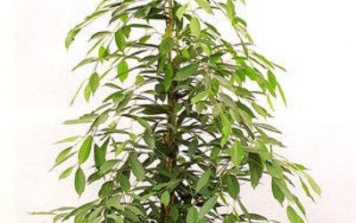 Bloemen Maris - Kamerplanten