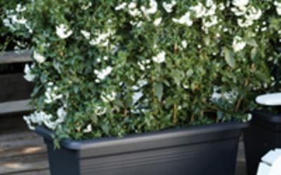 Bloemen Maris - Potterie & decoratie